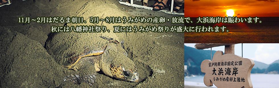 11月~2月はだるま朝日、5月~8月はうみがめの産卵・放流で、大浜海岸は賑わいます。秋には八幡神社祭り、夏にはうみがめ祭りが盛大に行われます。